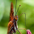 Butterfly Profile by Joe Jennelle