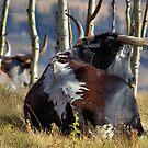 Alberta Longhorn2 by JamesA1