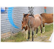 Herd of Horses on a Street Poster