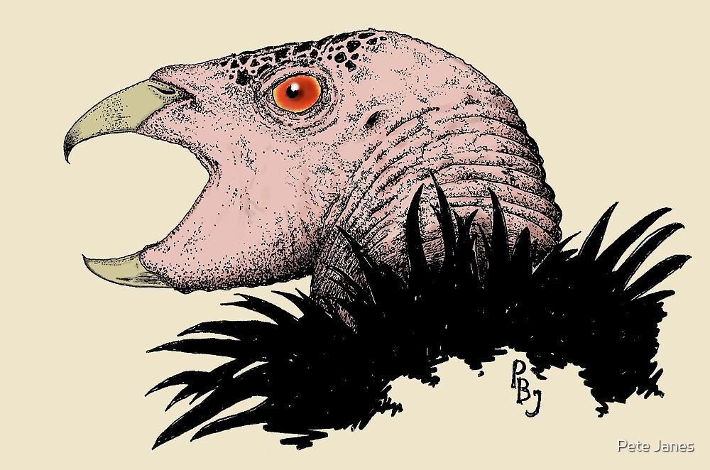 California Condor by Pete Janes