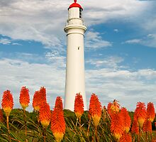Split Point Pokers,Aireys Inlet. by Darryl Fowler