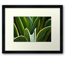 Smooth Agave Dwarf Century Framed Print