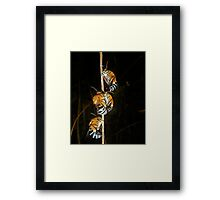 Just Hanging Around. Framed Print