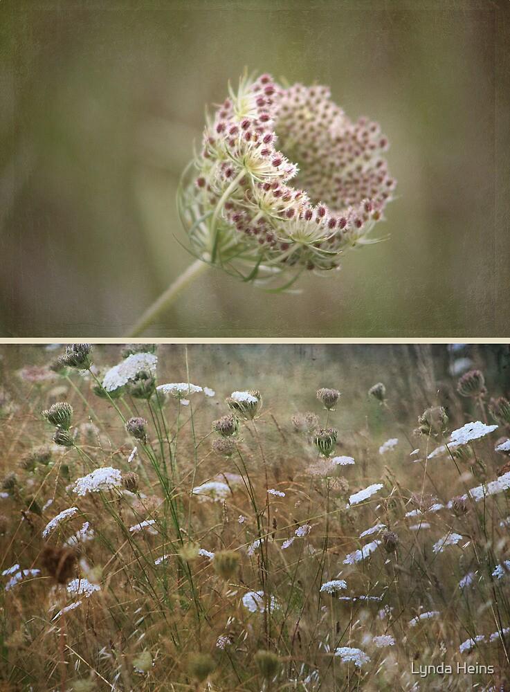 ~ Wild Beauty-Queen Annes Lace ~ by Lynda Heins