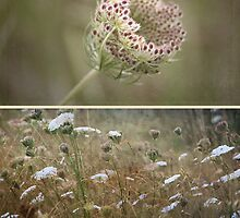 ~ Wild Beauty-Queen Annes Lace ~ by Lynda Heins