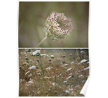 ~ Wild Beauty-Queen Annes Lace ~ Poster
