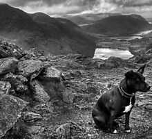 The Black & White Terrier... by Jamie  Green