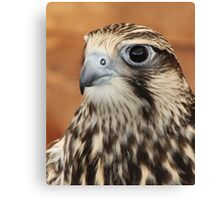 Falcon Feathers Canvas Print