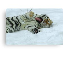 Ahh!  Now That Feels Good (Amur Tiger) Canvas Print