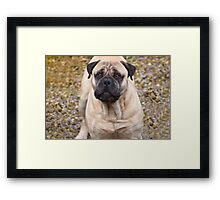 Say Hello To Foster - Bullmastiff Framed Print
