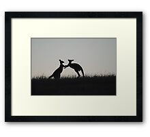 Kangaroos, Boxing for the Lady - Whittlesea, Victoria Framed Print