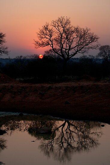 Lion Sands Sunset by Michael  Moss