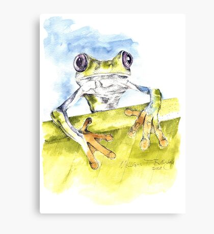 African Tree Frog Canvas Print