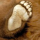 Why Yes, This Is My Bear Foot by Joe Jennelle