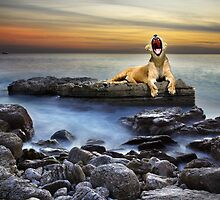 Sleepy Lioness by ccaetano