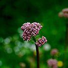Spring by rosedew