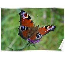 On a walk to butterfly tarn Poster