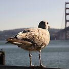 Golden Gate View by Kimberly Palmer