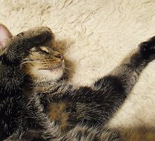 Purr-fectly Contented. by sarnia2