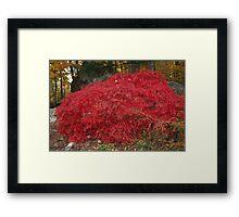 Burning Bush in the Fall Framed Print