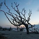 Driftwood Tree Upright & Proud by Joe Jennelle