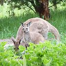 At last a photo of Joey next to Mum Floe! 'Arilka'. Mount Pleasant. by Rita Blom