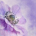 Anemone by Priska Wettstein