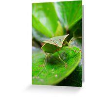 Loxa Flavicollis (Stink Bug) Greeting Card