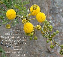 Acacia karroo by Rina Greeff
