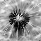 Dandelion - B&amp;W by SylBe