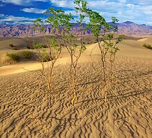 Life in Death Valley (Death Valley, California) by Brendon Perkins