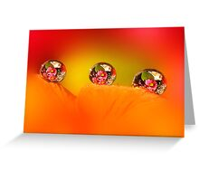 Rose and daisy drops Greeting Card