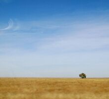 Isolated Tree by Rae Breaux