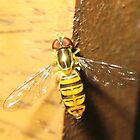 Small Bee on Lawn Chair by SusieG