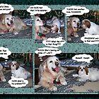 Dog Story by Pierre Frigon