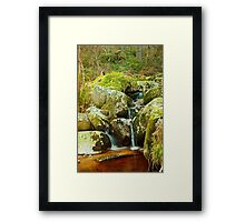Forest Waterway Framed Print