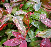 Bright leaves  by Rae Breaux