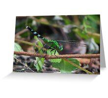 Green dragonfly on a twig Greeting Card