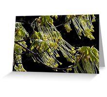 Maple Tree Tassels Greeting Card