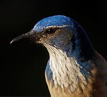 Bird's Eye View by martingilchrist