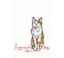 Cat drawing - 2011 Photographic Print
