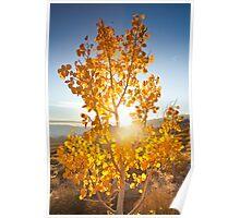 Aspen Sun Poster