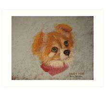 Daisy Mae - long-haired Chihuahua Art Print