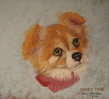 Daisy Mae - long-haired Chihuahua by Hilary Robinson