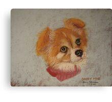 Daisy Mae - long-haired Chihuahua Canvas Print