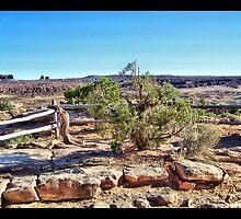 Rocks of Utah by SHickman