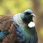 Tui......I think I need to go on a diet.......! by Roy  Massicks