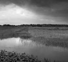 River of Grass by Barry J Merluzzo