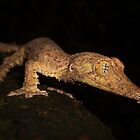 Leaf-tailed Gecko by Robbie Labanowski