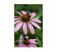 Bumble Bee Madness  Art Print